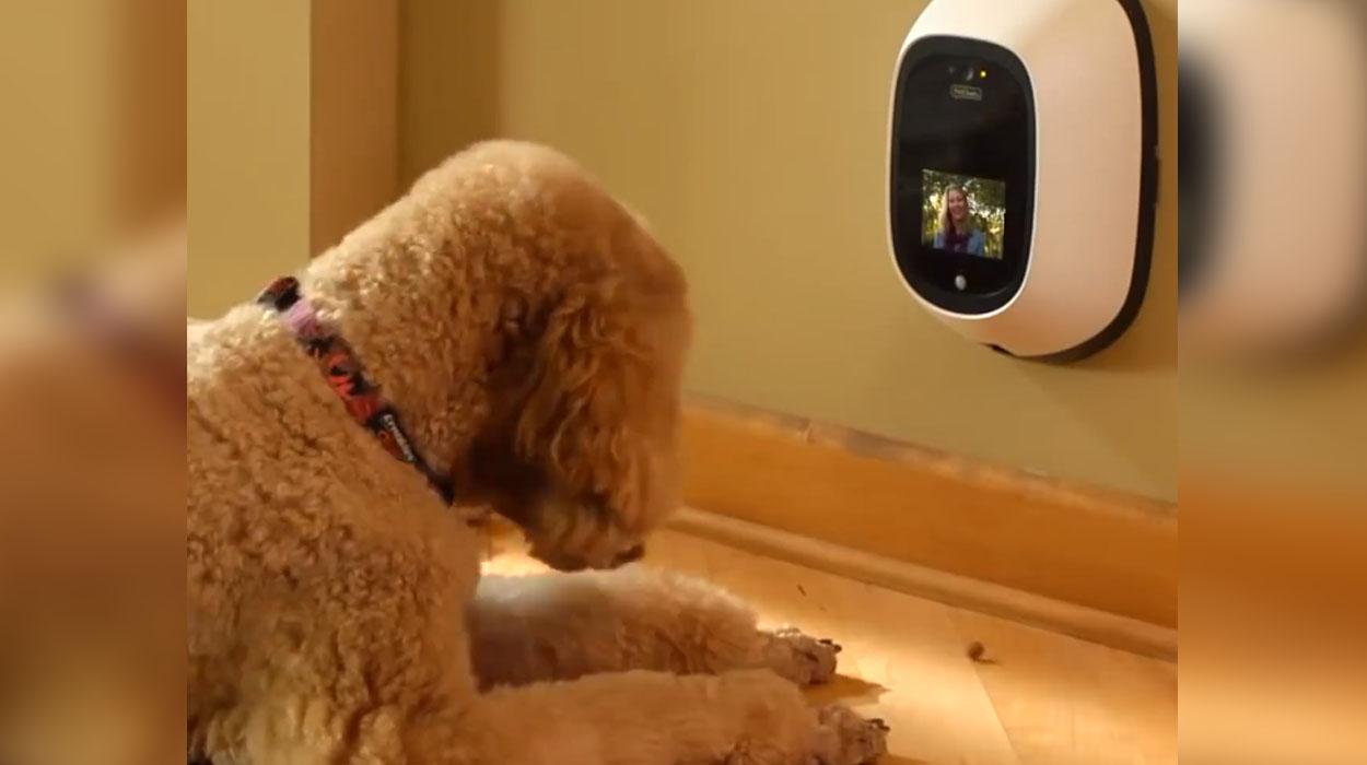 Një telefon edhe për qenin tuaj? Tashmë është e mundur…