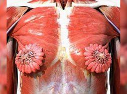 Trupi femres