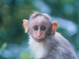 animal-animal-photography-ape-1670413