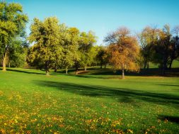 golf-grass-lawn-2336