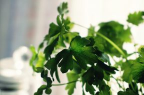 shallow-focus-photography-of-green-leaves-1275204