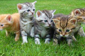 kitten-cat-rush-lucky-cat-45170